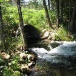 Cold Creek - Comfort Road