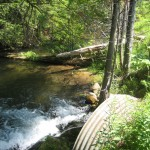 Cold Creek - Comfort Road 4
