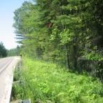 Cold Creek - Comfort Road 5
