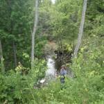 Finch Creek - Bebb Road