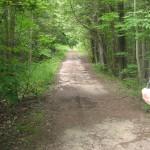 Finch Creek - Elder Road, East