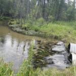 Finch Creek - Finch Creek Rd.